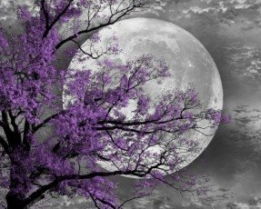 black-and-white-purple-tree-moon-wall
